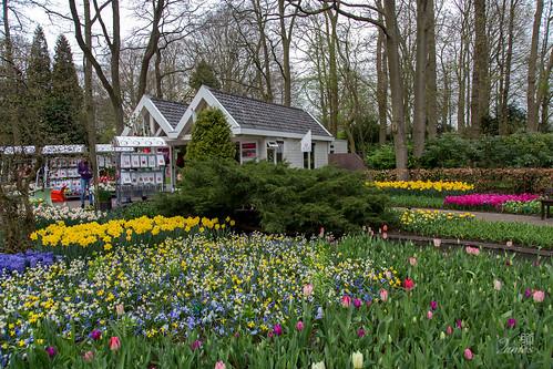 荷蘭。庫肯霍夫花園 Keukenhof Holland