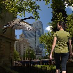 Birds In The City (swong95765) Tags: city sky woman bird buildings walking dof flight goose skyscrapper