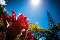 IMG_0030.jpg (Michele Stocco) Tags: hawaii gardenofeden 2016 mauiroadtohana