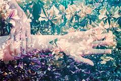 With New Sensation (Hayden_Williams) Tags: flowers film nature analog vintage garden lomo lomography hand purple arm doubleexposure hipster palm retro multipleexposure fd50mmf18 indie analogue canonae1 lomochromepurplexr100400