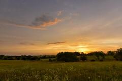 Prairie Sunsets (thefisch1) Tags: pink blue sunset sky orange cloud sun tree grass yellow interesting stem nikon angle outdoor horizon wide pasture cumulus kansas nikkor alto oogle 1424