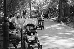 Central Park Infant Highway (zac evans photography) Tags: city nyc urban newyork brooklyn island metro queens manhatten staten yaszacevansphoto