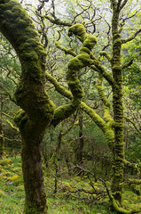 the magical forest (beeldmark) Tags: ireland nature forest natuur kerry killarney ie bos ierland ire cillairne