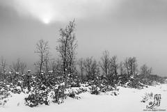 Winter (jlalvarezphotography_nature) Tags: winter espaa white black blanco forest landscape spain nieve negro paisaje leon bosque invierno robledal