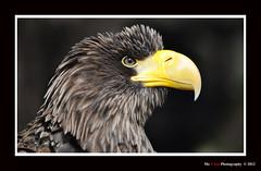 Beamish Wild S 005 (Me 2 You Photography 600,000+ Views) Tags: wild beamish mygearandme freedomtosoarlevel3birdphotosonly me2youphotography