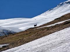 Scialpinismo Gran Sasso - Monte Brancastello