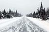 Recent Adventures ... (708718) Tags: snow alaska dangerous arcticcircle daltonhighway snowcoveredtrees icyroad coolfoot ianreid harshweather iceroadtruckers