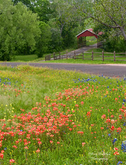 Texas Hill Country (Amy Hudechek Photography) Tags: road fence spring texas country coveredbridge wildflowers bluebonnets indianpaintbrush texaswildflowers chappelhill