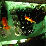 "Fishtank Cooler <a style=""margin-left:10px; font-size:0.8em;"" href=""http://www.flickr.com/photos/14315427@N00/7033986739/"" target=""_blank"">@flickr</a>"
