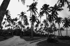 Black And White Photography Palm Trees Black Amp Amp White Palm Tree