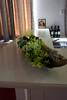 WIBO-2012-06-30-05062