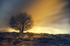 (inmacor) Tags: light sunset tree luz landscape arbol atardecer magic paisaje campo fields soledad moment escena soar meditar arbolsolitario inmacor