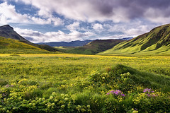 iceland greens (Dennis_F) Tags: flowers summer sky green nature water colors beautiful yellow clouds landscape island iceland wasser europa europe purple sommer south natur north norden pflanzen himmel wolken lila vik glacier gelb grn polar gletscher landschaft isle farben vulkan vulcanic sueden islandic