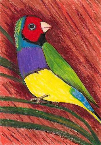Rainbow Bird - Original -  Pencil