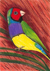 Rainbow Bird - Original -  Pencil (sixsisters) Tags: original red brown green bird art yellow pencil rainbow purple colored sensational vast sixsisters bbest