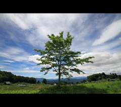 sky and tree (joytrip*) Tags: sky clouds canon wind  nagano    eos7d sigma816mmf4556