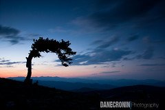 Lone Bristlecone on Mount Evans (Dane Cronin) Tags: sunset mountains co bristlecone mtevans 24105f4 canon1dsmk2 cloudsstormssunsetssunrises