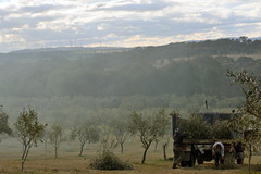Fedra Olive Grove | Collector, New South Wales (Ping Timeout) Tags: new city travel grandma sky people cloud sun holiday plant tree men wales truck work cafe highway little grove south under sydney harvest olive australia down stop bakery crop plantation nsw oil metropolis produce trim product metropolitan collector fedra