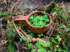 wood sorel . (fishfish_01) Tags: sorel kasa bushcraft kuksa woodsorel guksi