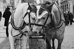 (Anja Ivanovna) Tags: horse love beautiful amazing kiss prague