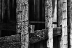 a tangle (Yoshi T. (kagirohi)) Tags: bw monochrome japan zeiss canon nara oldtown