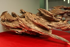 Item A (goldenfield) Tags: goldenfield gfe agarwood aquilaria goldenfieldholdings