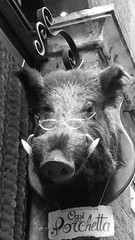 Oggi Porchetta, (Today Porchetti) Wild Boars Head Wearing Specs. (Pauline Corfield) Tags: italy tuscany siena oggiporchetta wildboarsheadwearingspecs