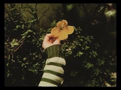 yellow (yukilettice) Tags: flowers plants plant flores flower cute green planta nature yellow natureza flor free magical truelove inlove naturelover