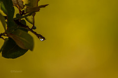Dew (Goutam.Krishnamoorthy) Tags: morning arizona sun lake tree green nature leaves sunrise branch dew prescott yavapai lynxlake