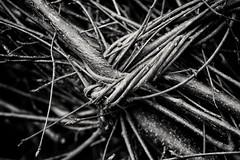 Knotted sticks (vickireynolds2311) Tags: sticks cmwdblackandwhite