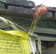 Tangle Over Prayer Flag (Room With A View) Tags: explore prayerflags tangle odc explore432