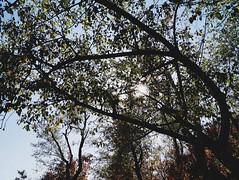 2015-09-28 10.41.17 1 (anastasiya_klenyaeva) Tags: sky nature yellow russia autmn     saratov vsco vscocam vscorussia vscosaratov