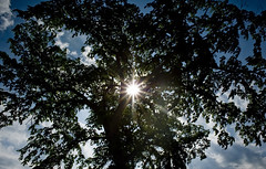 Clarence Rockland (Phil Grondin) Tags: blue sky sun ontario tree green island soleil leaf nikon ile vert bleu ciel 24mm nikkor nuage arbre clarence coulds flair feuilles rockland d700