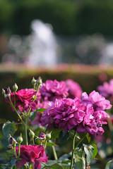20160522-D7-DS7_2298.jpg (d3_plus) Tags: park street sky plant flower nature japan garden walking drive tokyo nikon scenery bokeh fine daily bloom   nikkor   kanagawa   dailyphoto touring     thesedays  fineday  jindaiji          d700 kanagawapref nikond700
