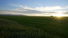 DSC05830 (picturesfrommars) Tags: a6000 sel1018 uww nature landscape sun