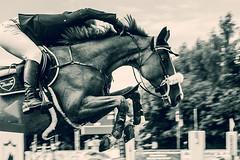 Jump (feldweg) Tags: horse sport caballo cheval jump s cavallo pferd turnier sprung reiten hest kon springen horsejump sspringen dersekow