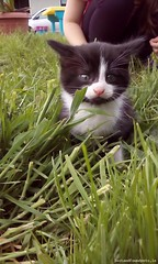 Fri, Jul 1st, 2016 Lost Male Cat - Rural, Shrule, Mayo (Lost and Found Pets Ireland) Tags: rural cat lost july mayo 2016 lostcatruralmayo