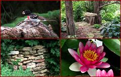 A much happier reunion (Laura Rowan) Tags: shirland nearrockford illinois rural accident site people friendly birders yard garden grosbeak waterlily room bricks trees