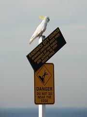 beware of danger! (Elise Arod) Tags: travel bird nature parrot australia freedomtosoarlevel1birdphotosonly