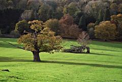 Quiet light (Lune Rambler) Tags: park trees rural fuji calm cumbria lightandshade milnthorpe olétusfotos lunerambler dallamtowerdeerpark