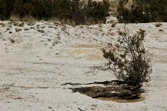 Sculture meridionali (Campi Flegrei) (Animusanima) Tags: italy white landscape sand italia campania southern napoli naples paesaggio vulcano sud sabbia solfatara campiflegrei