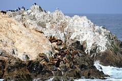 Bird Rock (teohwp85) Tags: california bird beach rock drive pebble 17mile