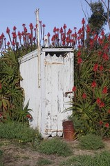 Craptacular (Seaside-Mike) Tags: sea holiday seaside sand pentax australia toilet shack outhouse southaustralia crapper dunny rustyandcrusty blackpoint holidayhouse craptacular sea2side mikestobaphotography