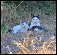 Mommy and Kitten (tracie7779) Tags: cats kitten mother felines feral