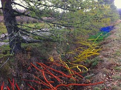 Real Calder, Les racines de l'arc-en-ciel, 2012 (Retis) Tags: nature rainbow colorful roots orchard installation installationart landart verger arcenciel sthilaire racines insitu sainthilaire montsainthilaire phmre ephemeralart sitespecificart octobre2012 crationssurlechamp ralcalder lesracinesdelarcenciel