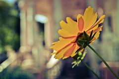 Flores do Chateau D'eau. (Tas S. Bordignon) Tags: flowers brazil flores flower nature brasil nikon natureza flor rs riograndedosul cachoeiradosul d3100
