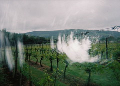 Vineyard (ellamaxine) Tags: camera water photography experiment bleach manipulation holes testing photograph process damaged scratch disposable boil