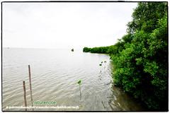 Mangrove forest Chonburi tour by naturenote_E12461014-019