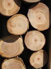 Wood_4630277683_l