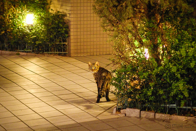 Today's Cat@2014-04-17